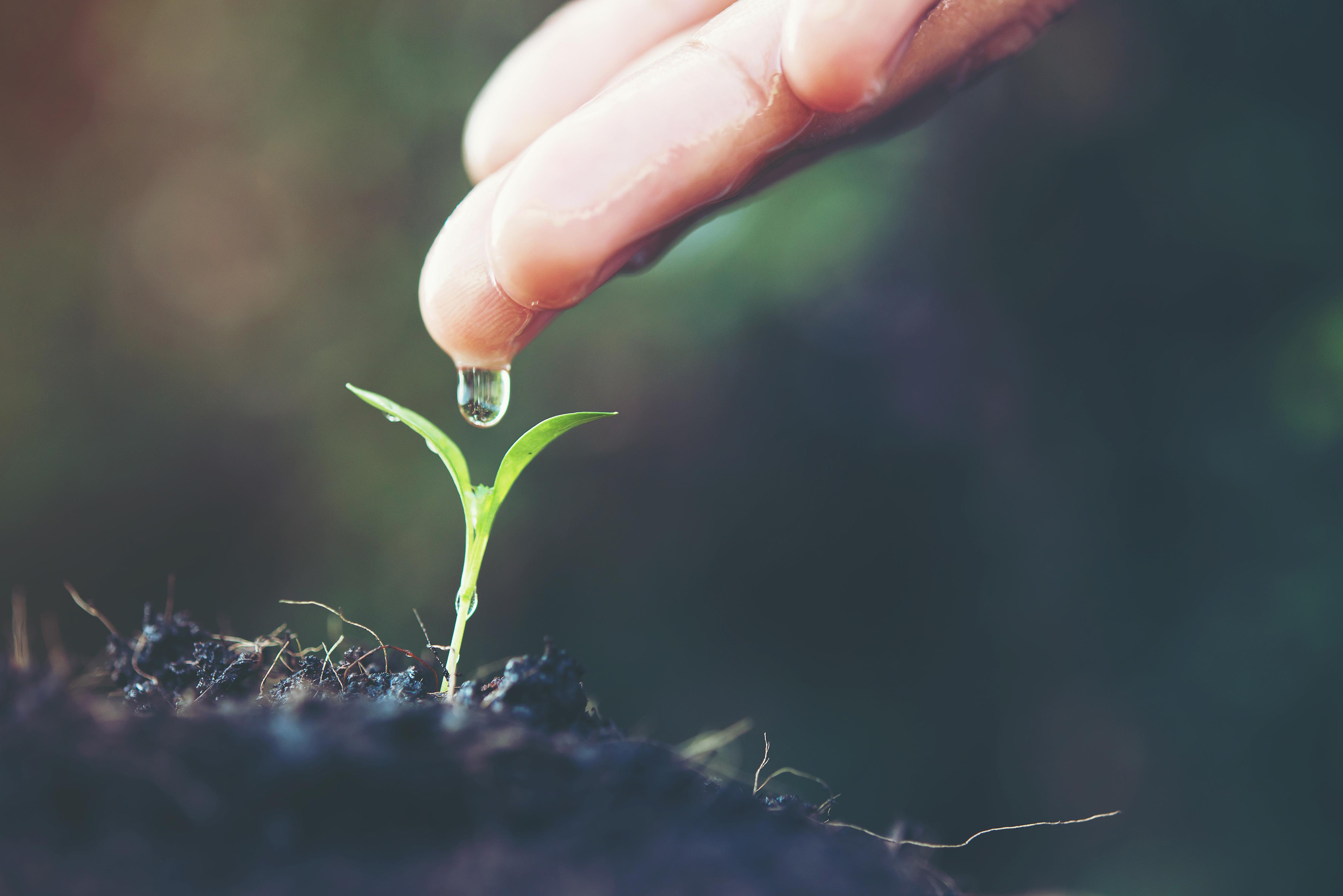 Consulenza Ambientale per l'Azienda, Sistema di Gestione Ambientale_ AP Consulting srl